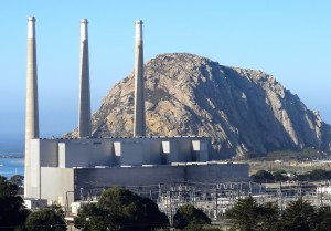 That controversial plant insults Morro Rock.